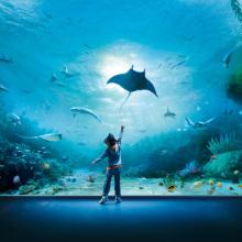 I 10 Acquari più incredibili del mondo
