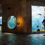 Monterey Bay Aquarium 9