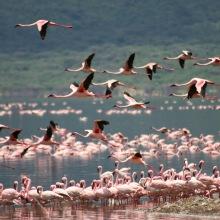 Kenya, il suggestivo lago dei Fenicotteri Rosa