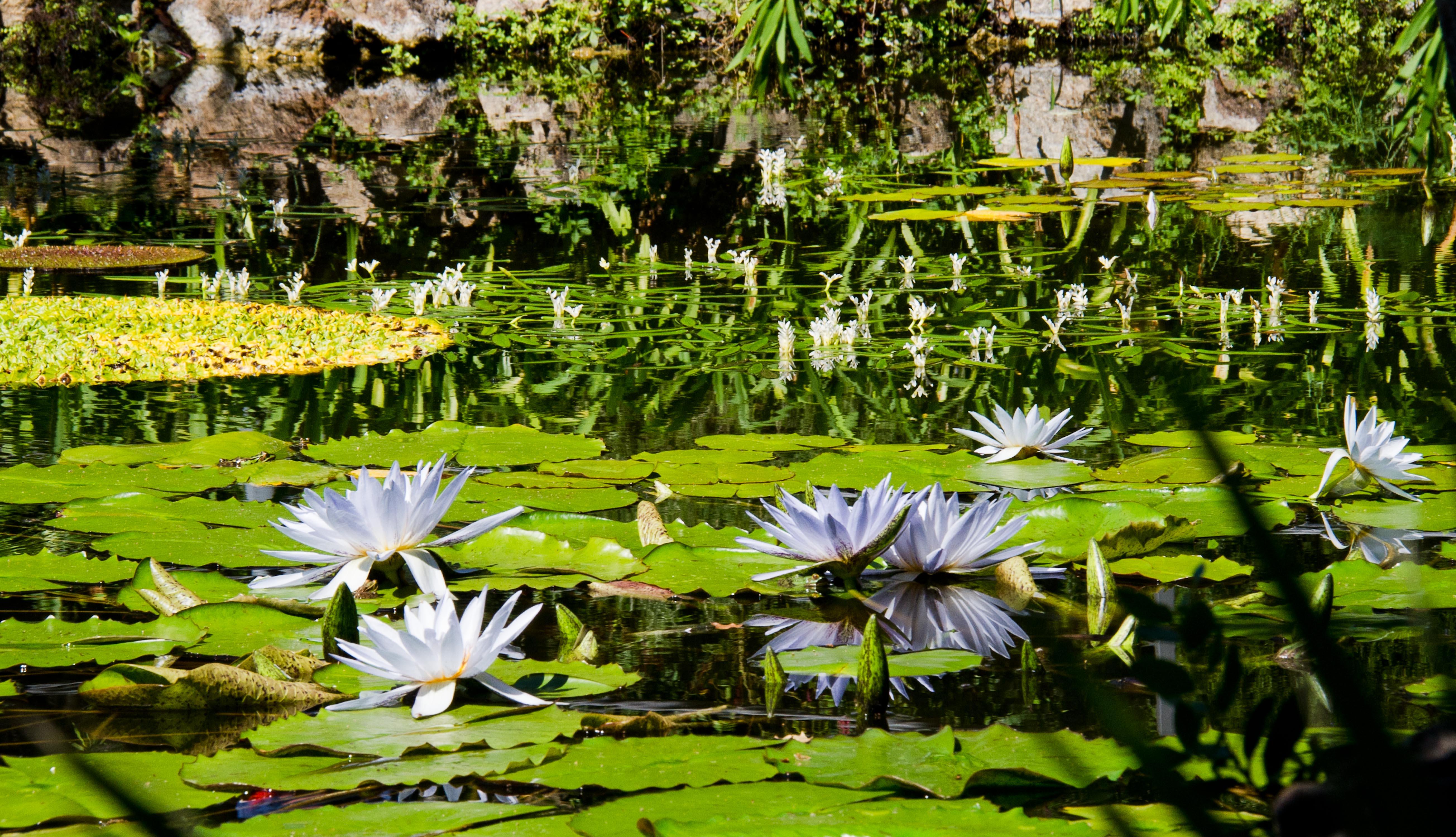I parchi pi belli d italia coolture hunter for Giardini meravigliosi