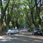 Rua Gonçalo de Carvalho10