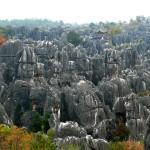 La foresta di pietra