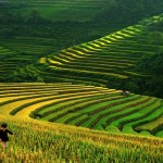 mountainPaddy-Vietnam
