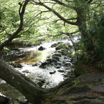 Tollymore Forest Parkn